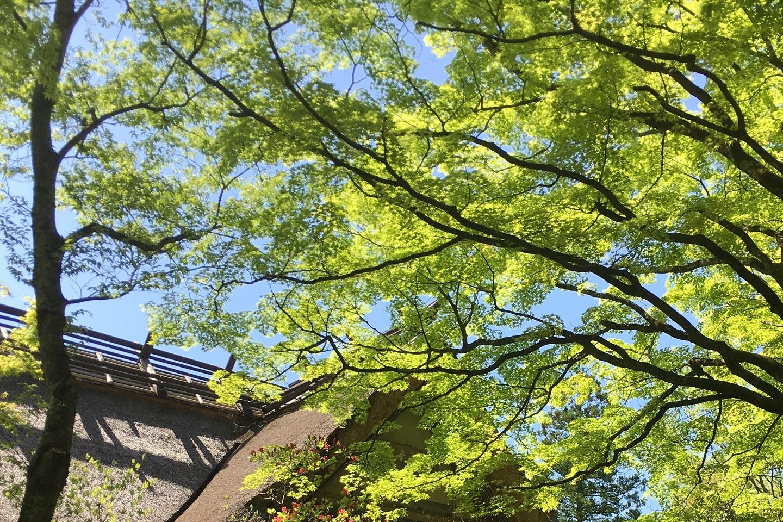 新緑の季節です