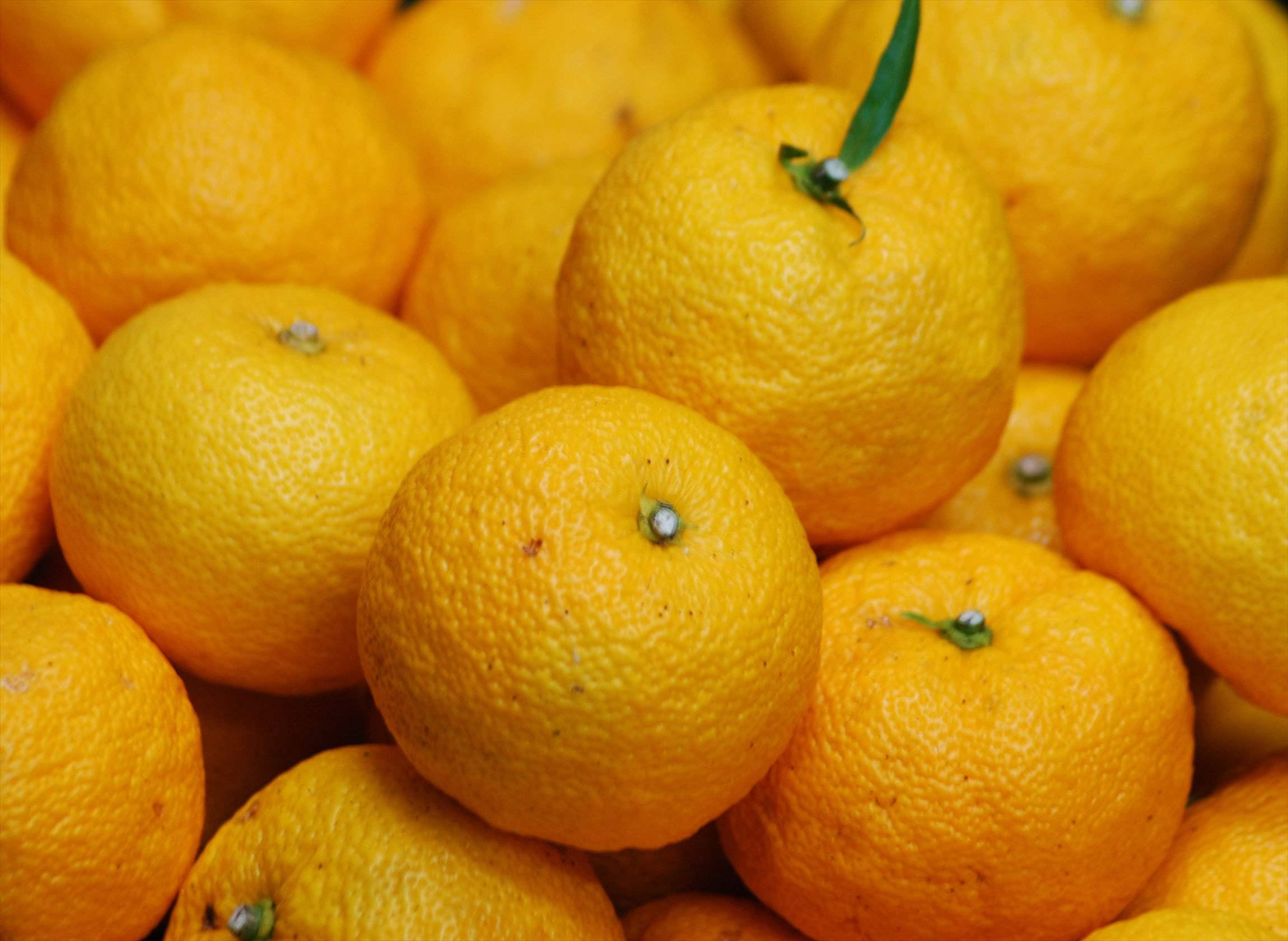 柚子練りのご案内