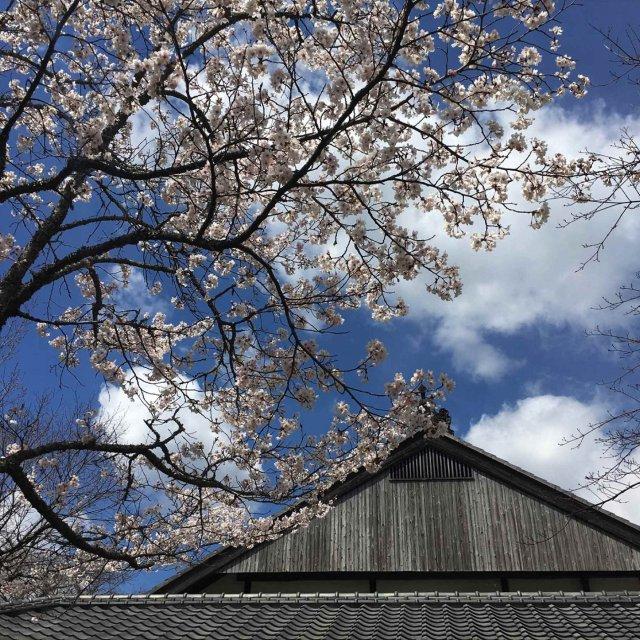 春らんまんコース(季節限定)