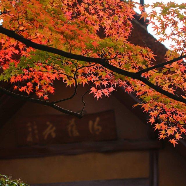 庭の紅葉が見頃です